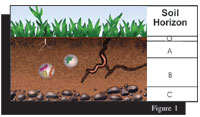 Figure 1: Soil Horizon